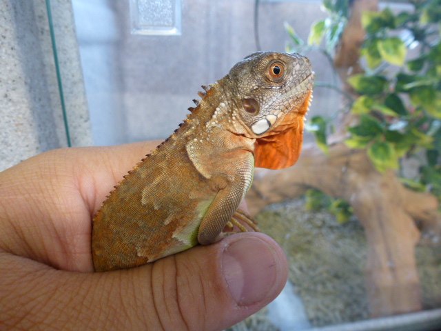 mix and match other lizards and snakes   la habra pets